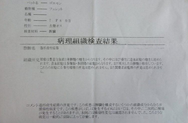 病理組織検査結果(脾臓)
