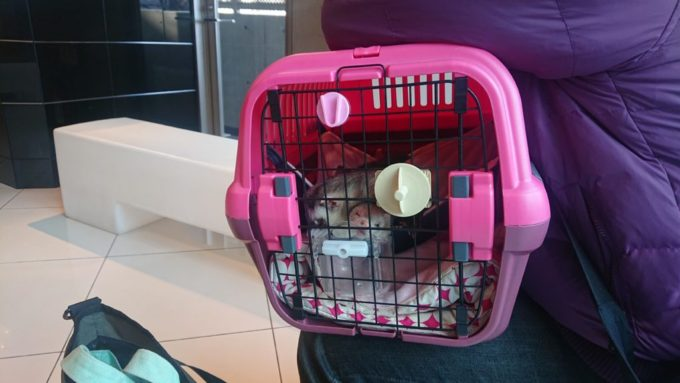 動物病院の待合室にて